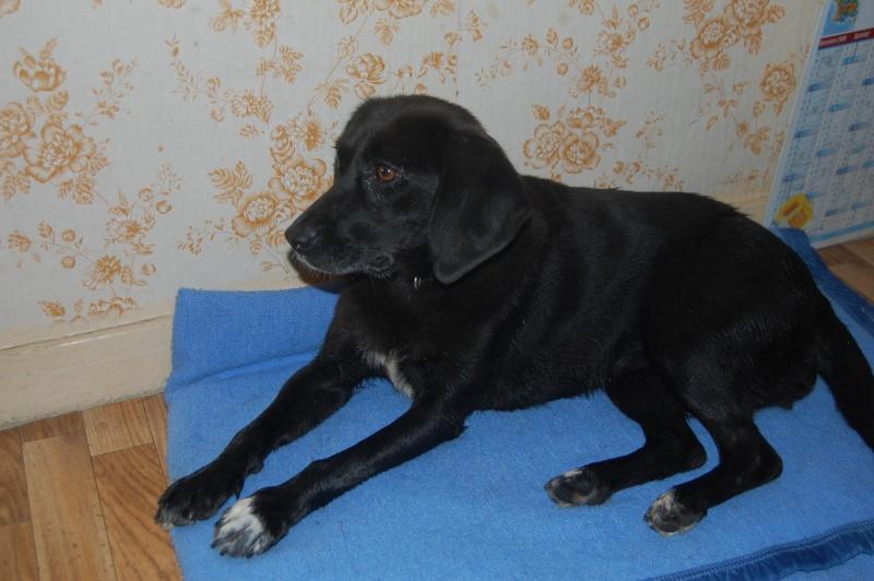 SISKA croisée labrador née en 01/07/2008 adoptée par FRANCINE  ( 79 ) Dsc_5310