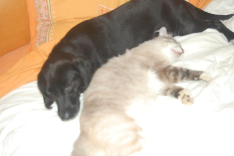 SISKA croisée labrador née en 01/07/2008 adoptée par FRANCINE  ( 79 ) Dsc_5413