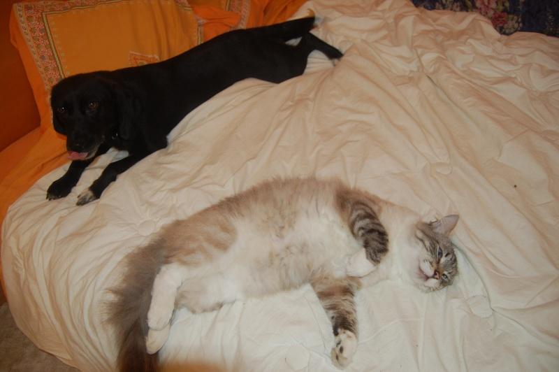 SISKA croisée labrador née en 01/07/2008 adoptée par FRANCINE  ( 79 ) Dsc_5414