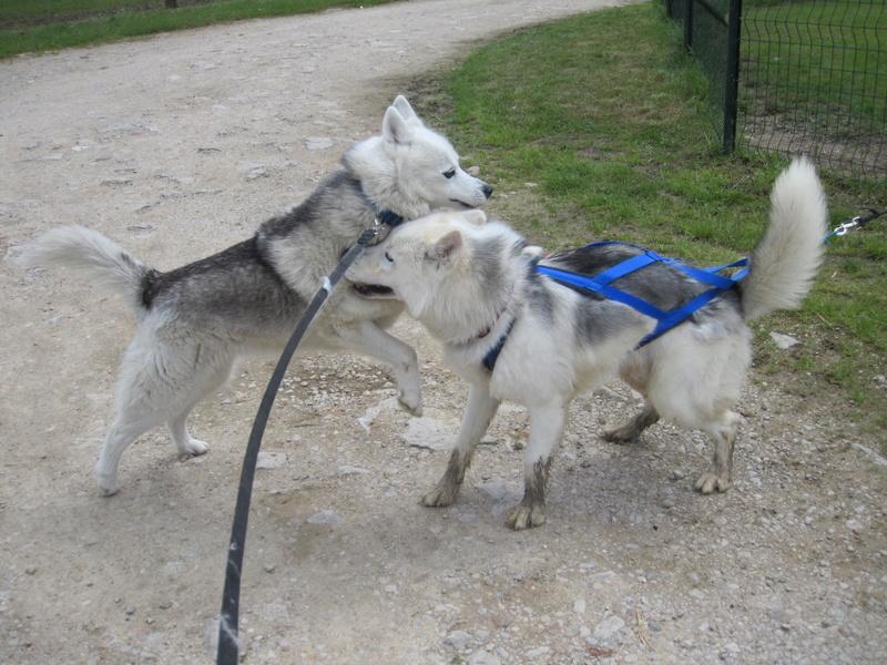 Saskia et Jiro, partie 2 - Page 36 Saskia11