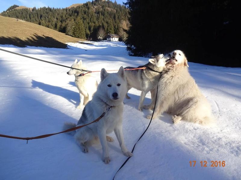 Saskia et Jiro, suite - Page 14 Vuipay10