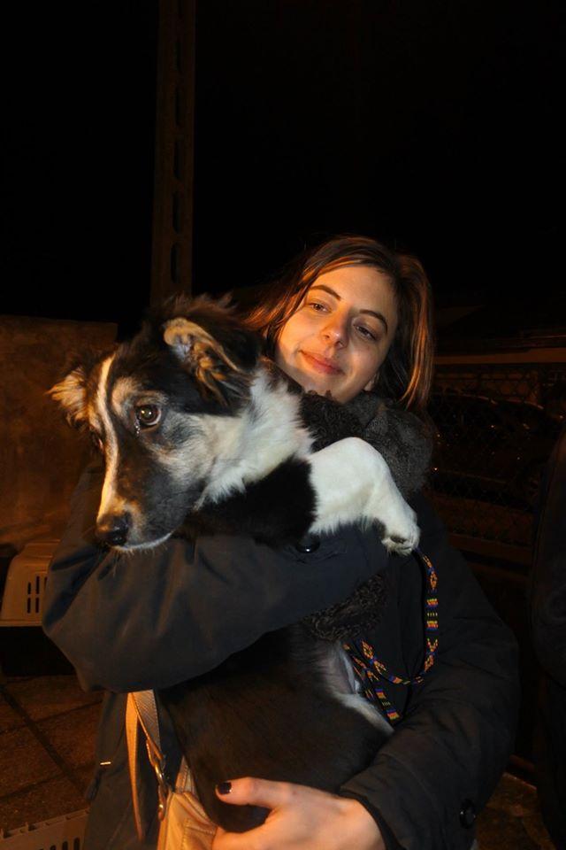 TOMI né en oct 2016, EN FA DEPT 77/89, dernier rescapé des chiots de Cristiana - marrainé par Karst - SC-SOS -R A_tomi11