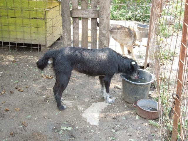 NOYA, née en 2010, En FA dans le 94 - type griffon - Parrainée par Yemtsi-R-SOS-FB-LBC-SC-AS-30MA Noya_b10