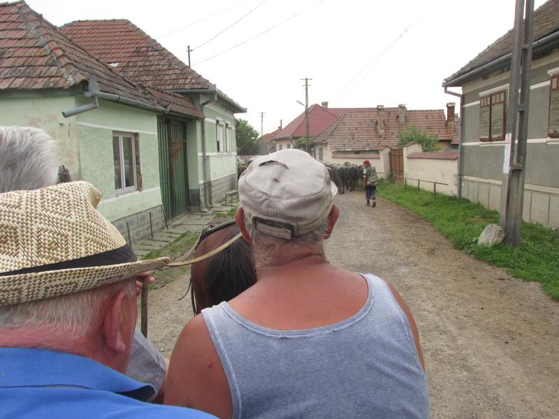 Roumanie ... là aussi c'est l'Europe. - Page 4 Rouman13
