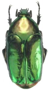 créer un forum : Entomo-coléos - Portail Agestr10