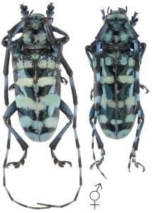 créer un forum : Entomo-coléos - Portail Anoplo10