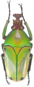 créer un forum : Entomo-coléos - Portail Cyprol10