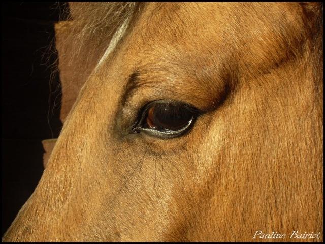 Parce que Eisenheim c'est pas seulement des chevaux, c'est aussi des photos ! Sdc11610