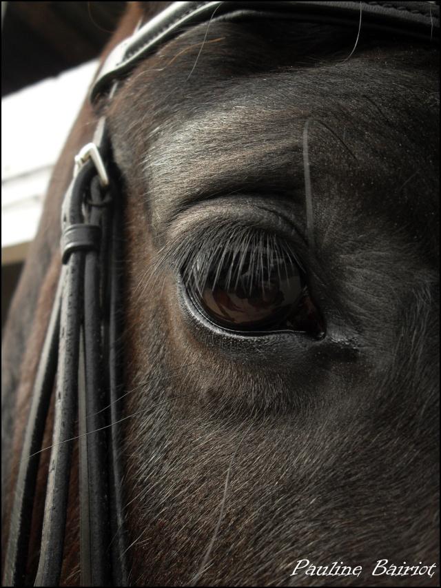 Parce que Eisenheim c'est pas seulement des chevaux, c'est aussi des photos ! Sdc12210