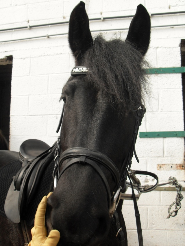 Parce que Eisenheim c'est pas seulement des chevaux, c'est aussi des photos ! Sdc12211