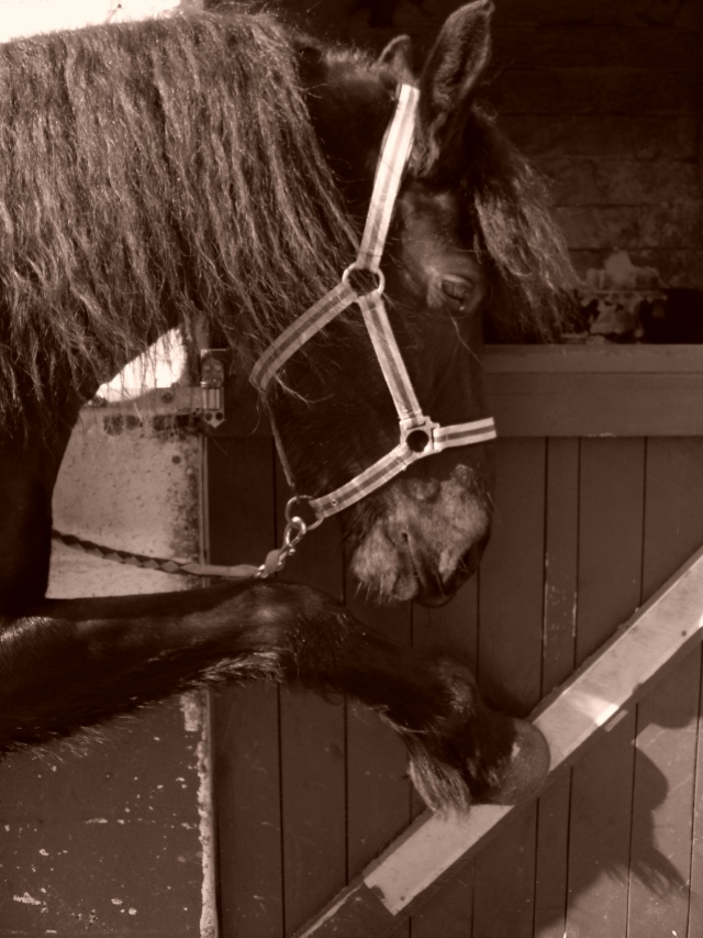 Parce que Eisenheim c'est pas seulement des chevaux, c'est aussi des photos ! Sdc13210