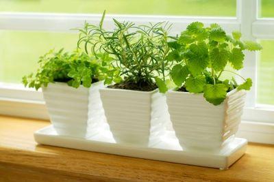 5 Best Herbs For an Indoor Herb Garden Herbs110