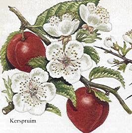 "Créations masque  "" théme cerisier"" - Page 2 Flower10"