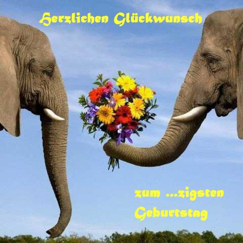 Herzlichen Glueckwunsch, liebe Betty Elefan10