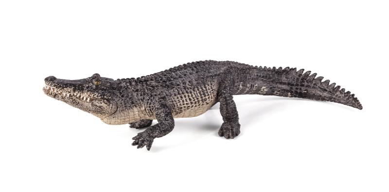 New Mojö 2017 Alligator! 38716810
