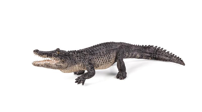 New Mojö 2017 Alligator! 38716811