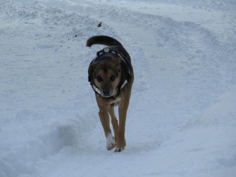 Balades canines: Pays de Gex/Jura/Genève ou Albertville (73) - Page 5 Img_2825