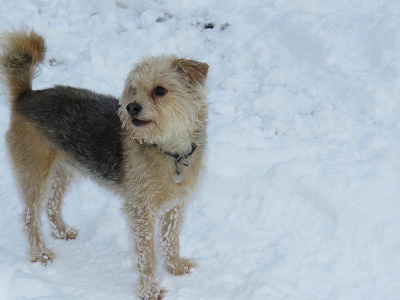Balades canines: Pays de Gex/Jura/Genève ou Albertville (73) - Page 5 Img_2826