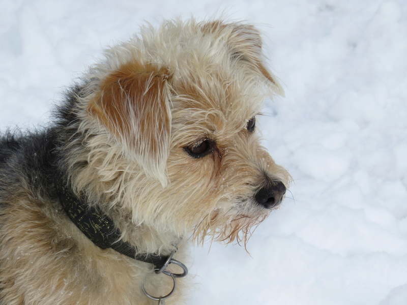 Balades canines: Pays de Gex/Jura/Genève ou Albertville (73) - Page 5 Img_2827