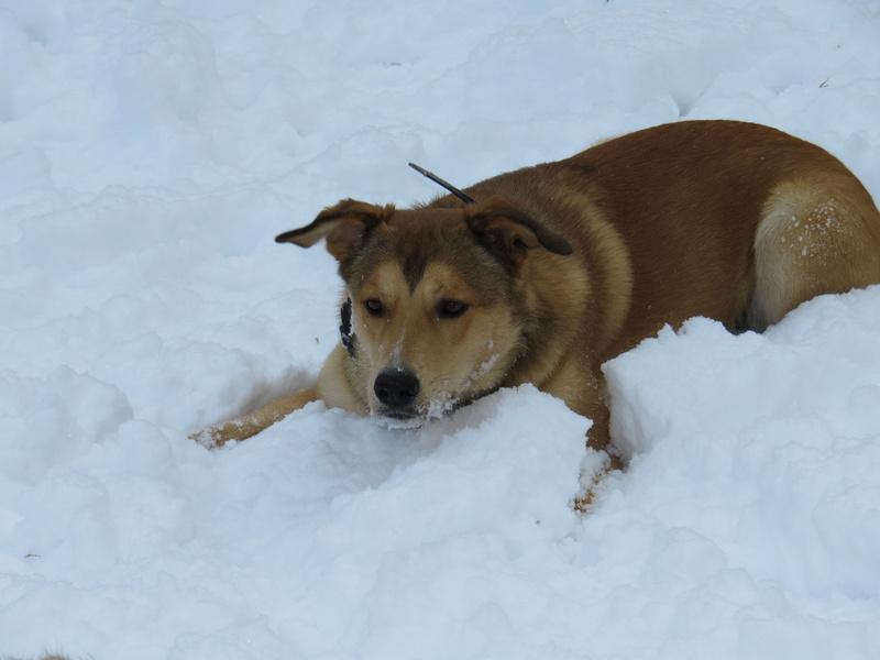 Balades canines: Pays de Gex/Jura/Genève ou Albertville (73) - Page 5 Img_2828