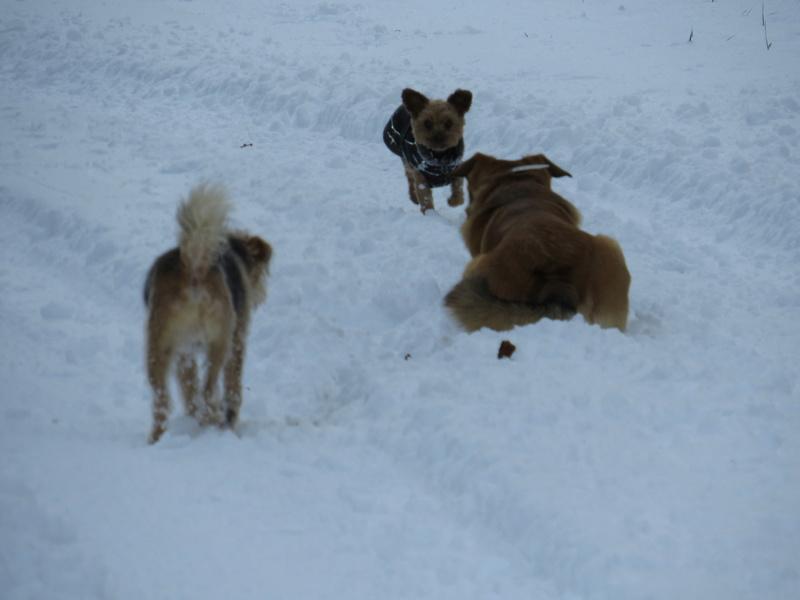 Balades canines: Pays de Gex/Jura/Genève ou Albertville (73) - Page 5 Img_2830