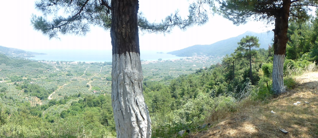 Greece, the Island of Thassos, Golden Beach, MiniTrain trip 59510