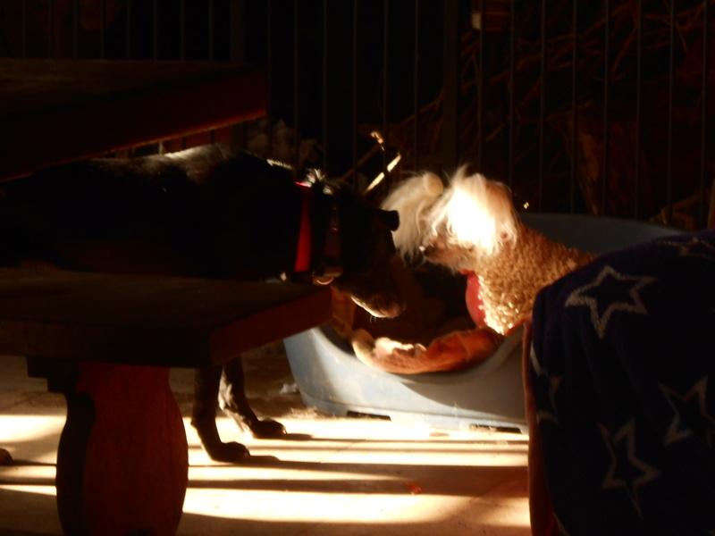 VIOLETTE - Femelle croisée, taille moyenne née env décembre 2010 (PASCANI) - en FA chez kimcham (dpt49) - doit changer de famille ! - Page 12 Violet11