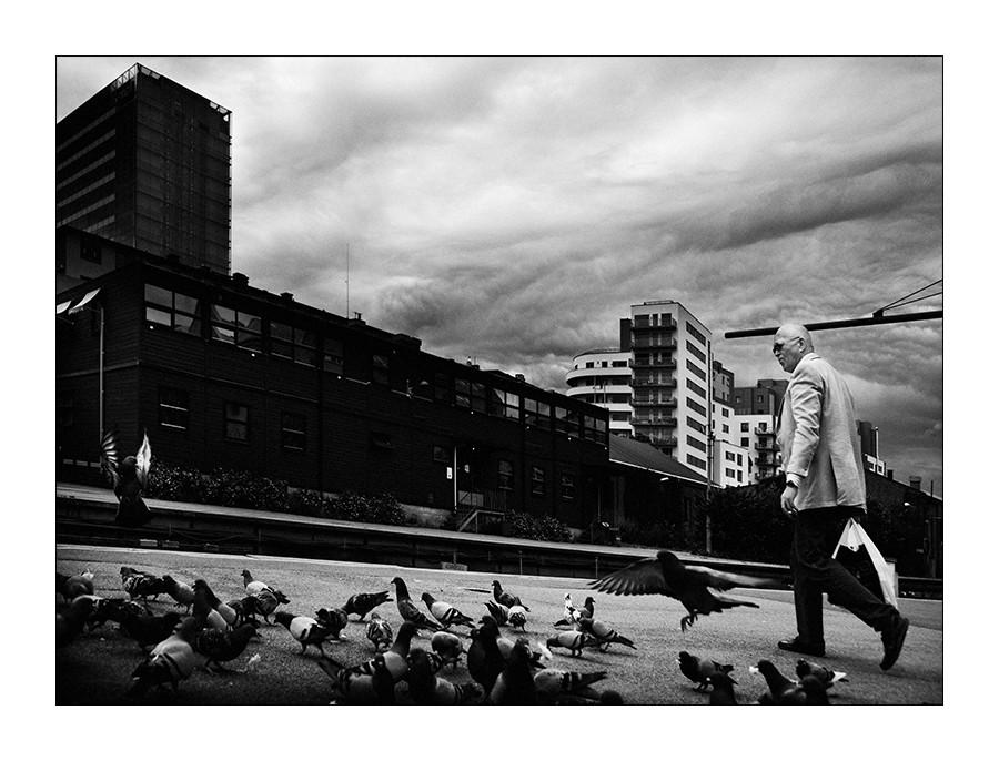 Kojak et le pigeon Ninja + 1 ajout The_ma10