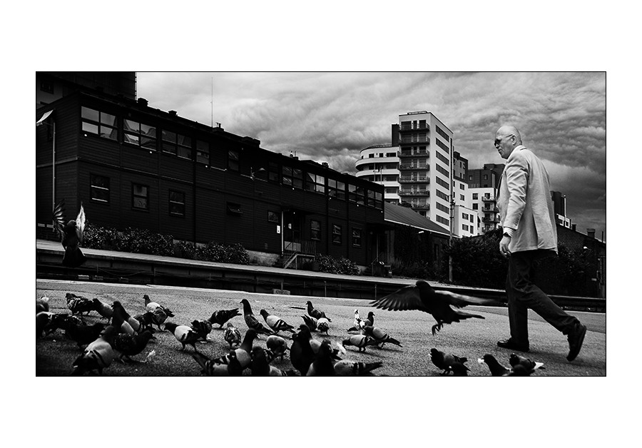 Kojak et le pigeon Ninja + 1 ajout The_ma11