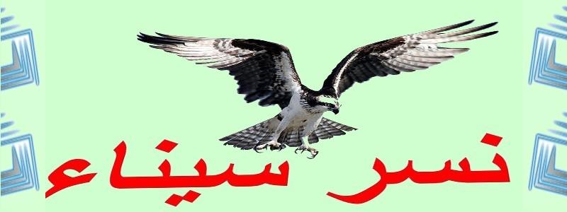 نسر سيناء