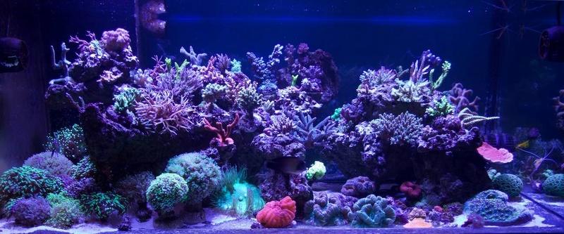Navarchus Reef Tank 14859810
