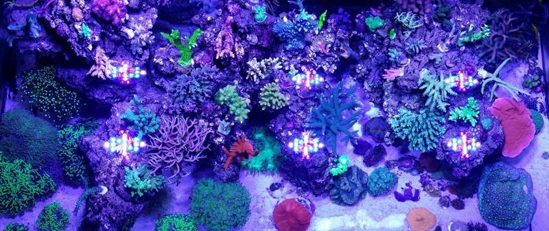 Navarchus Reef Tank - Page 2 14890410