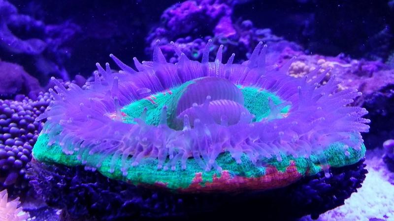 Navarchus Reef Tank - Page 3 20161113