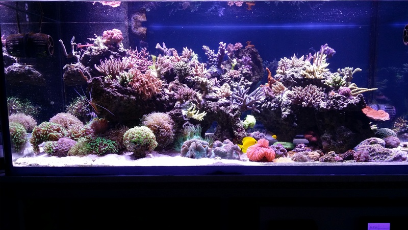 Navarchus Reef Tank - Page 3 20161115