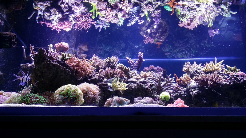 Navarchus Reef Tank - Page 3 20161116