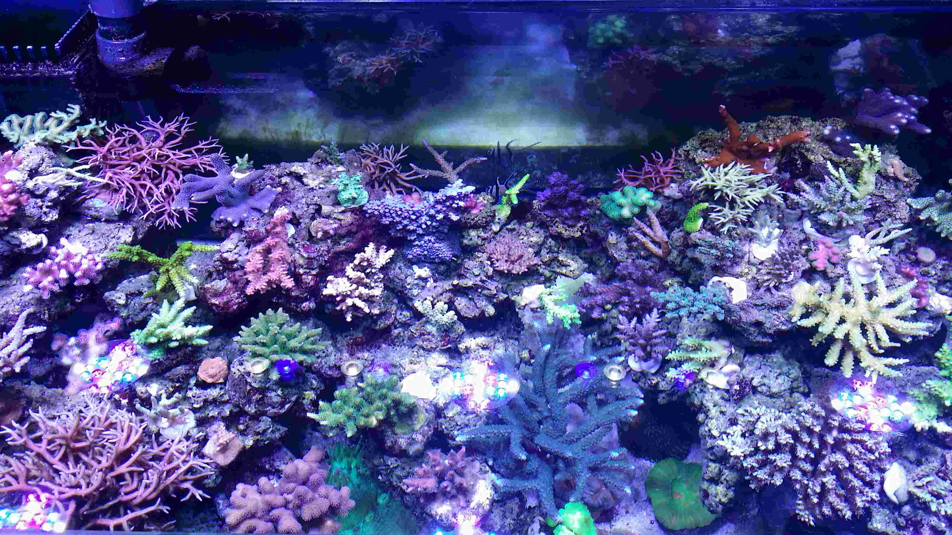 Navarchus Reef Tank - Page 4 20170111