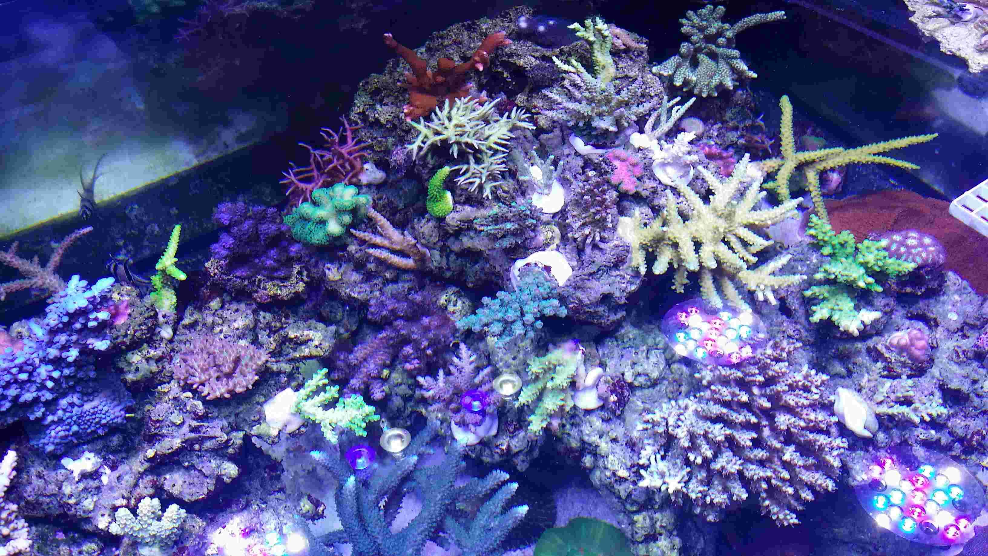 Navarchus Reef Tank - Page 4 20170112