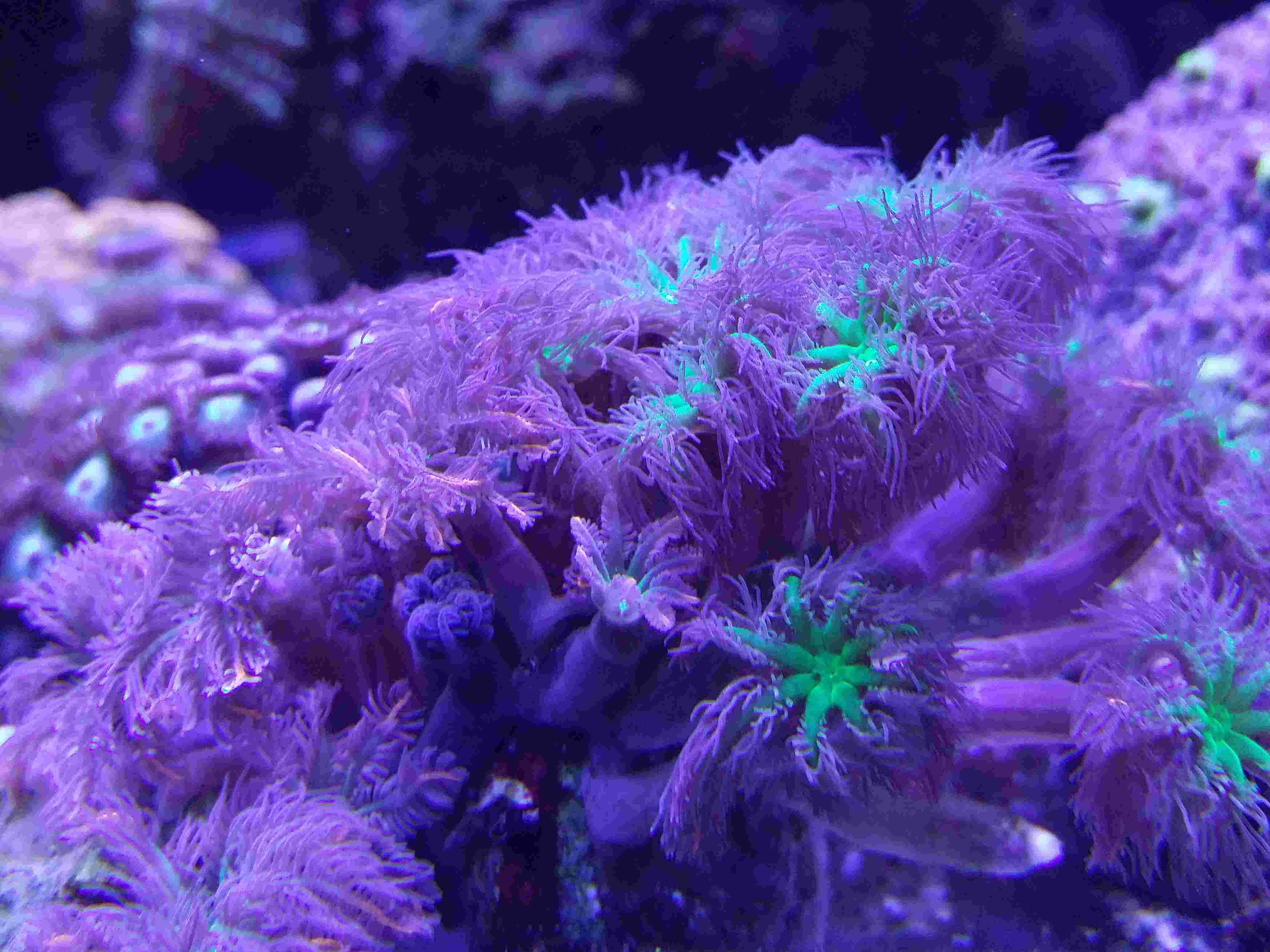 Navarchus Reef Tank - Page 4 Img_2010