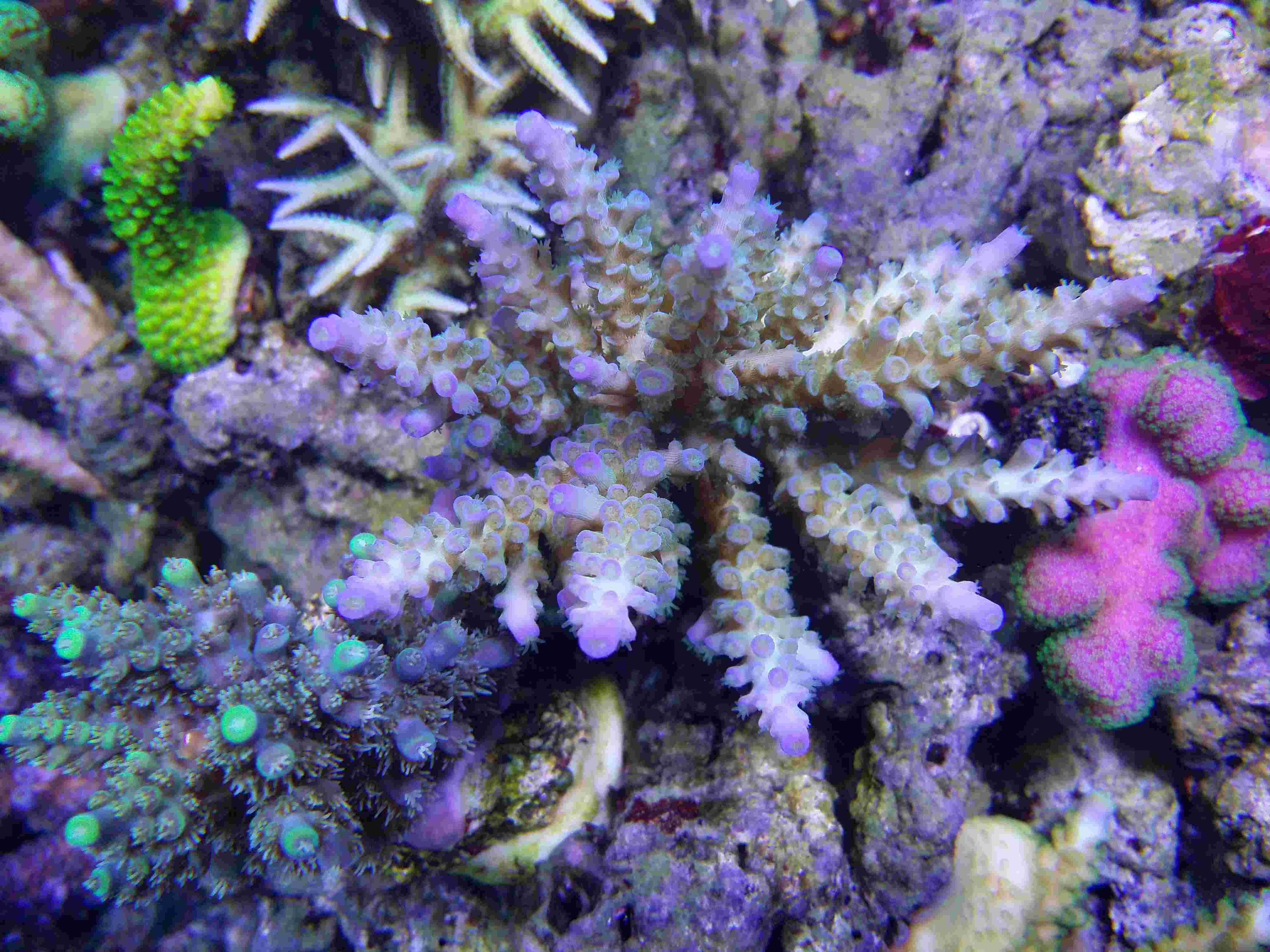 Navarchus Reef Tank - Page 4 Img_2012