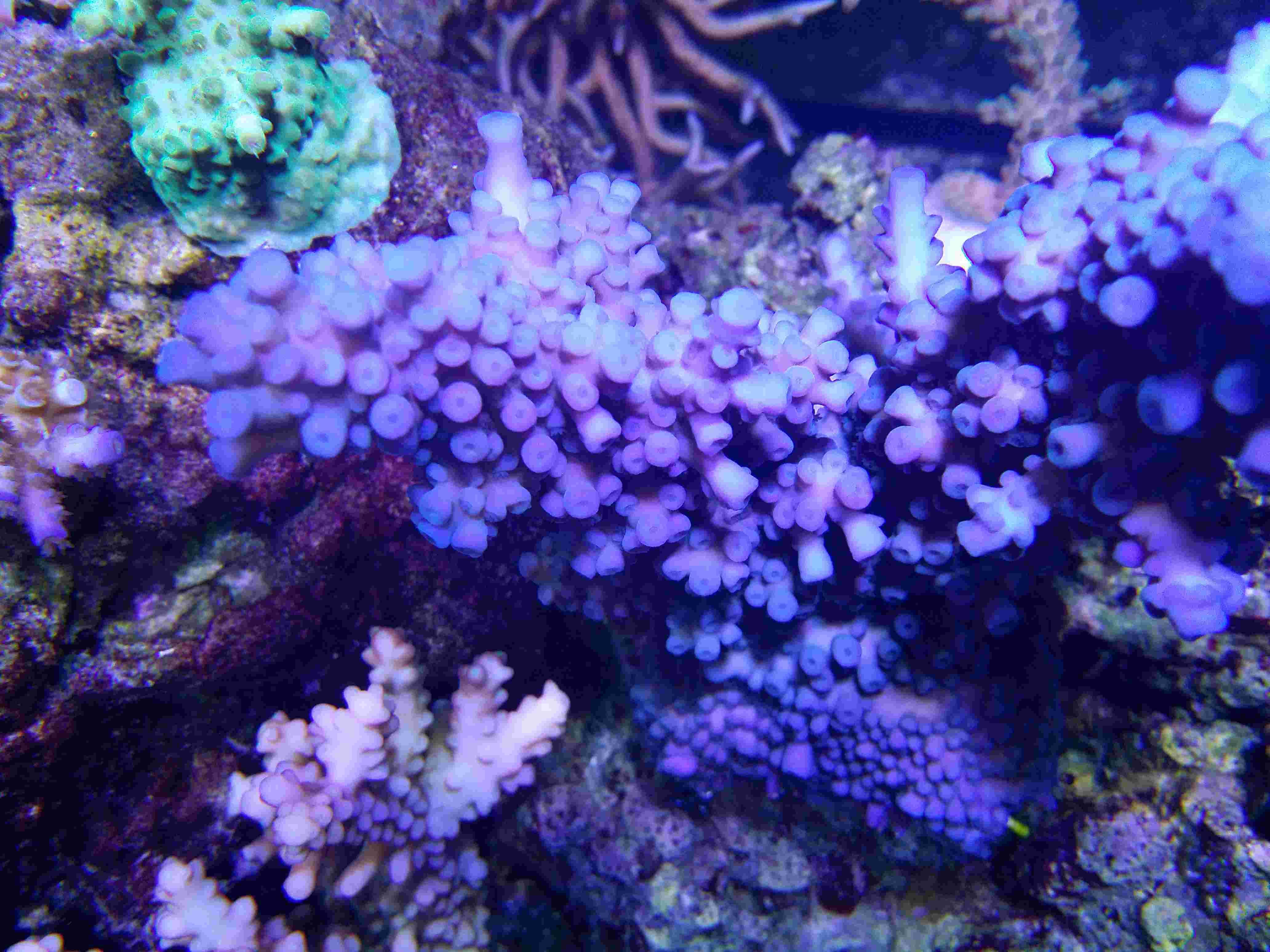 Navarchus Reef Tank - Page 4 Img_2019