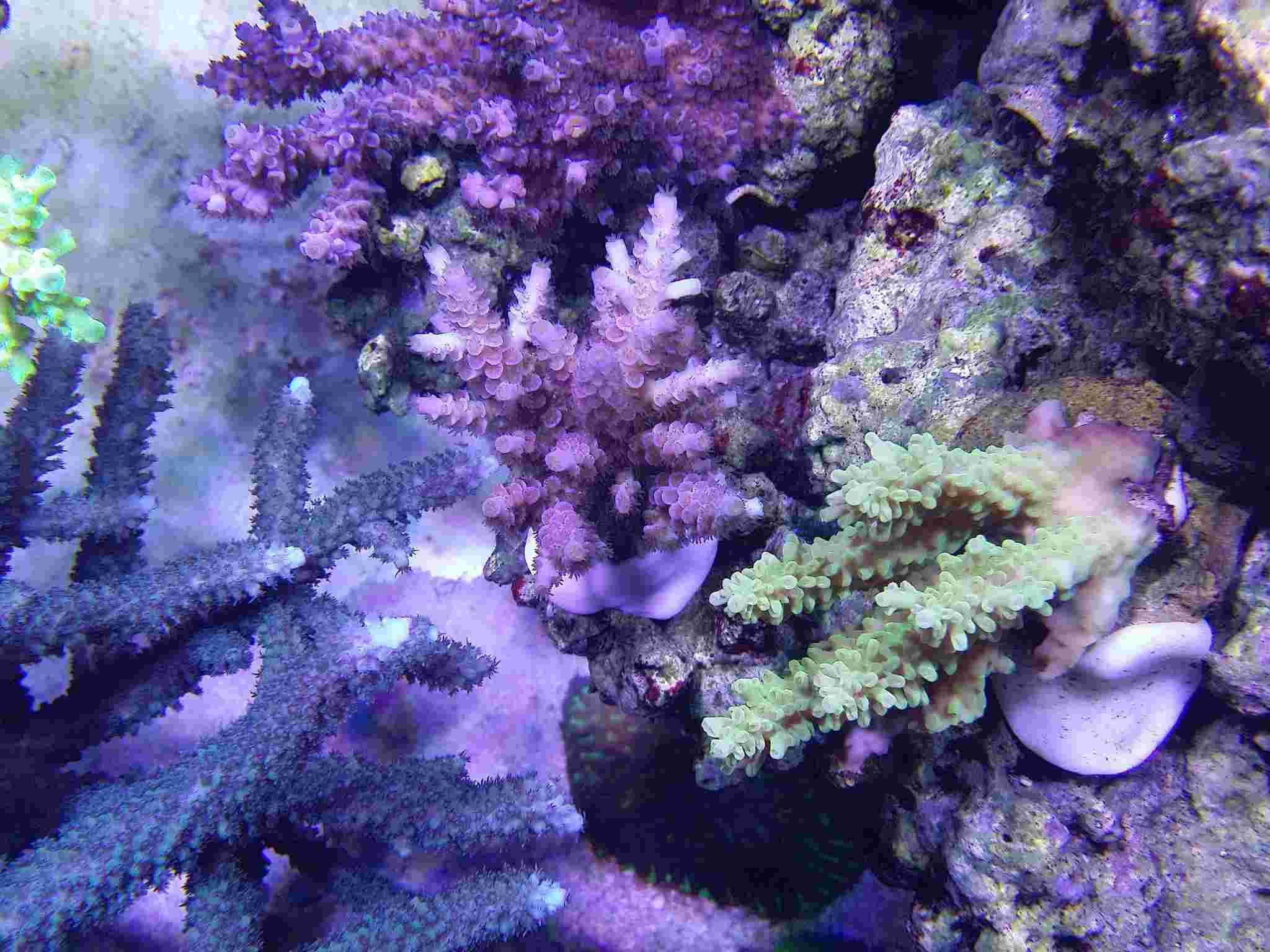 Navarchus Reef Tank - Page 4 Img_2023