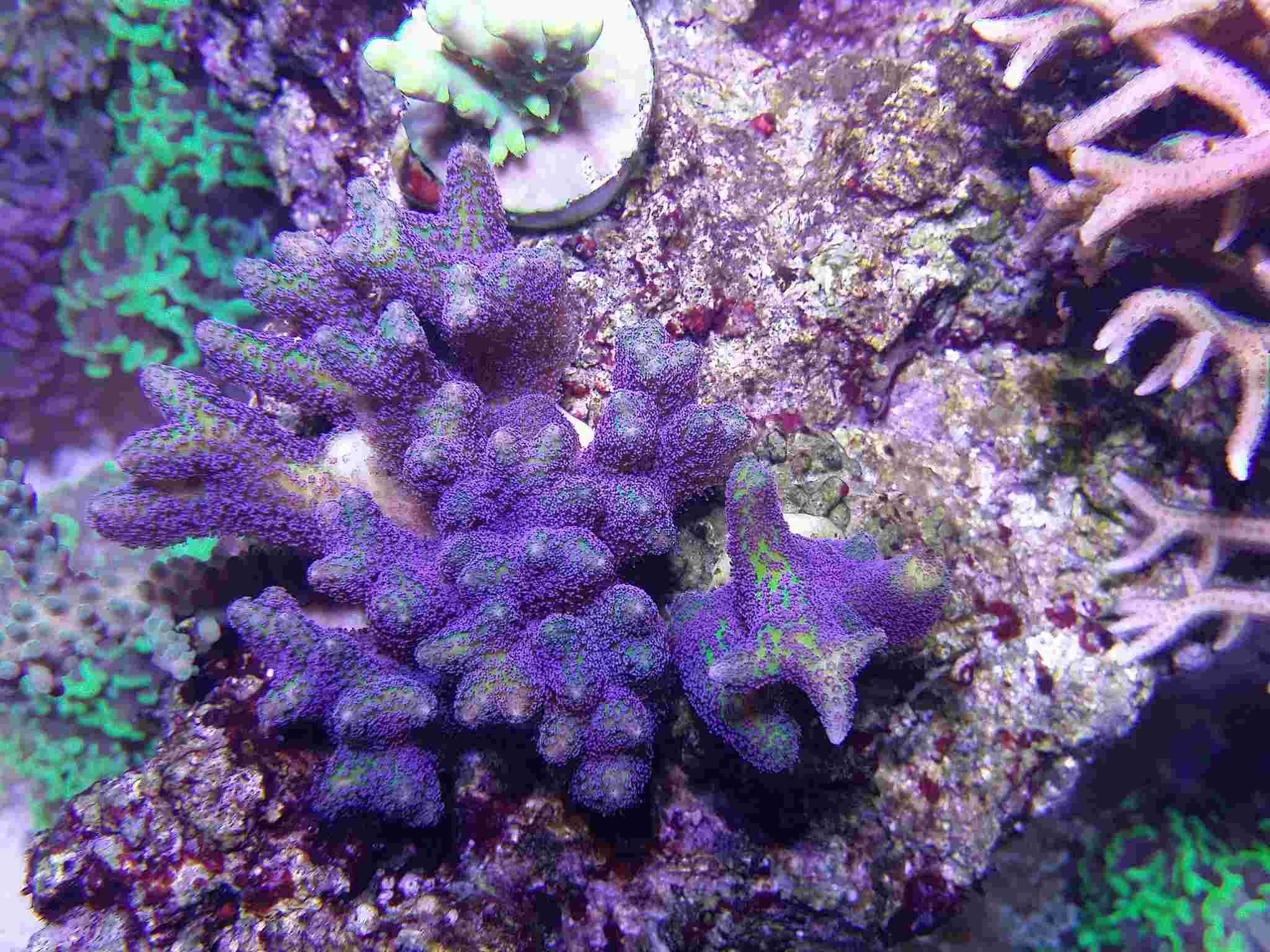 Navarchus Reef Tank - Page 4 Img_2026