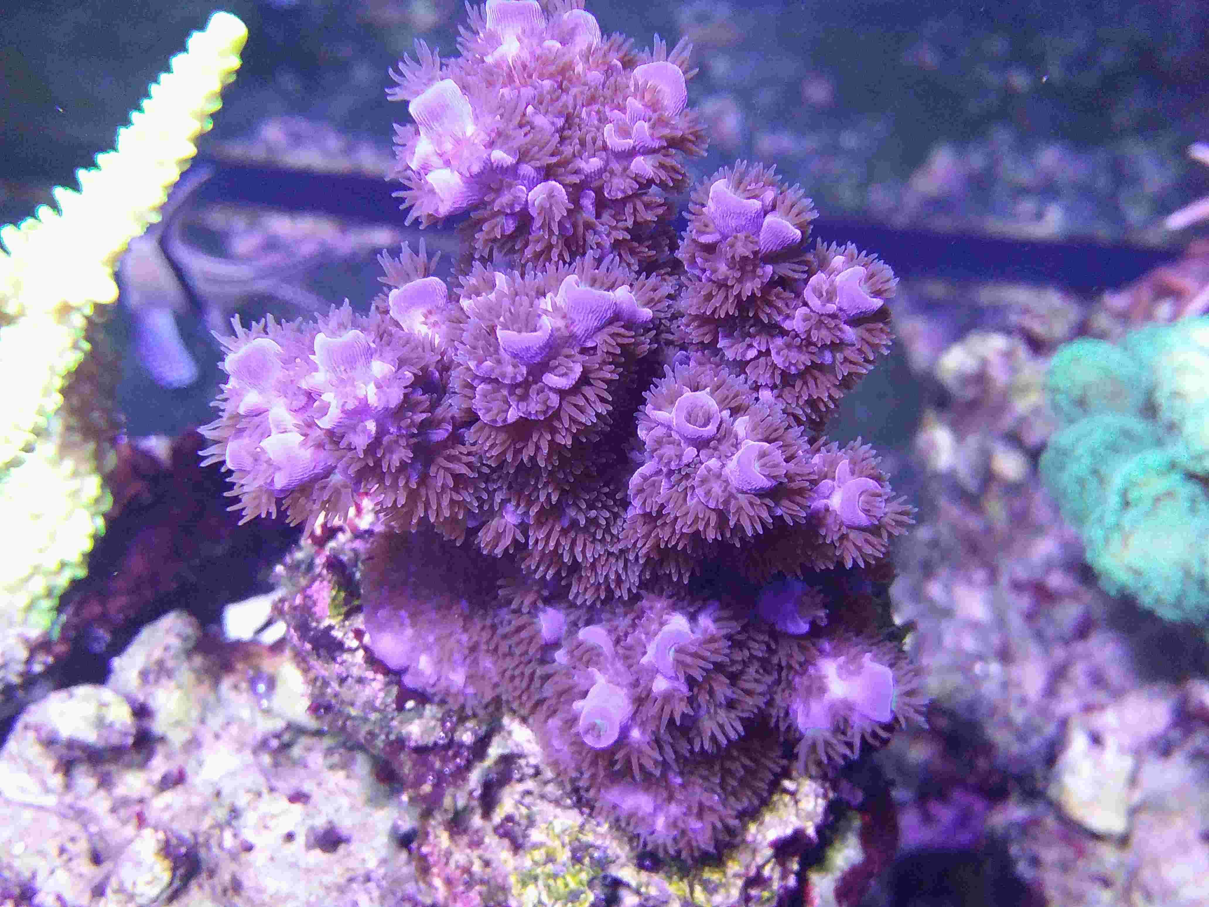Navarchus Reef Tank - Page 4 Img_2027