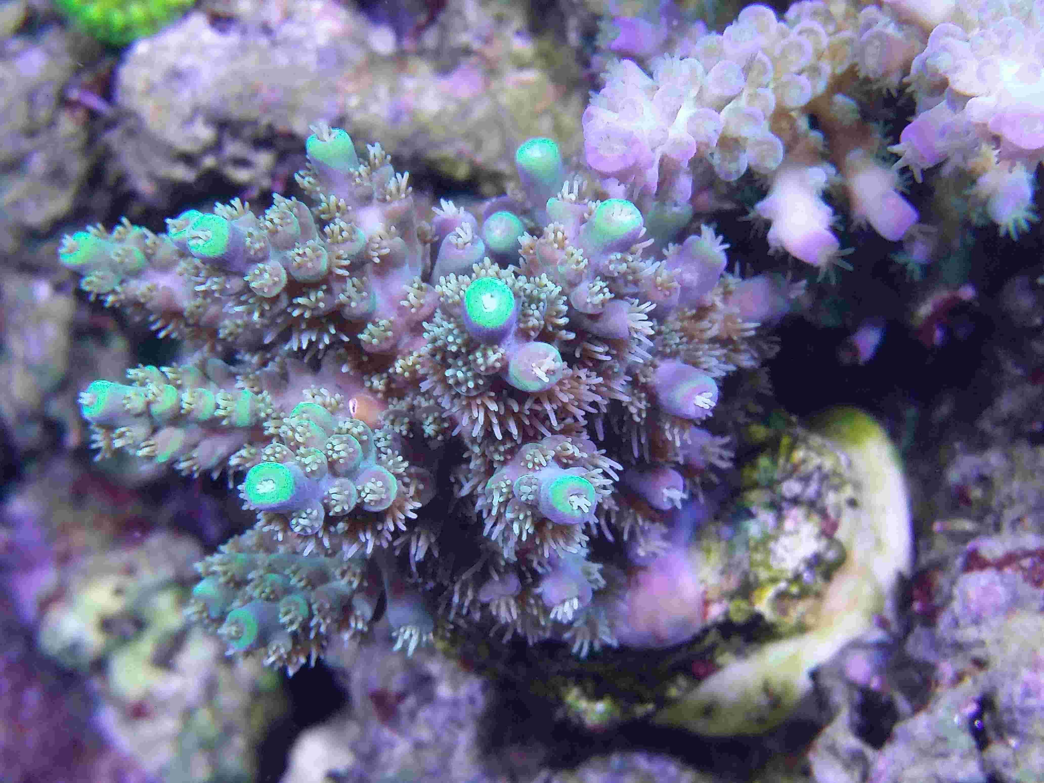 Navarchus Reef Tank - Page 4 Img_2030