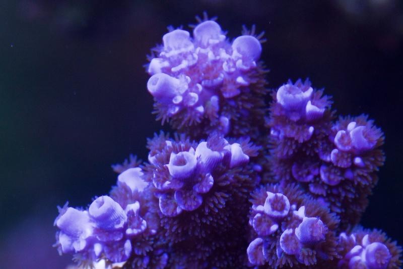 Navarchus Reef Tank - Page 2 Img_8445