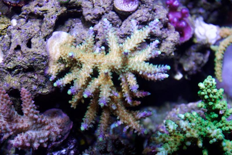 Navarchus Reef Tank - Page 2 Img_8469