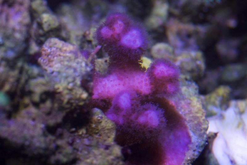 Navarchus Reef Tank - Page 2 Img_8471