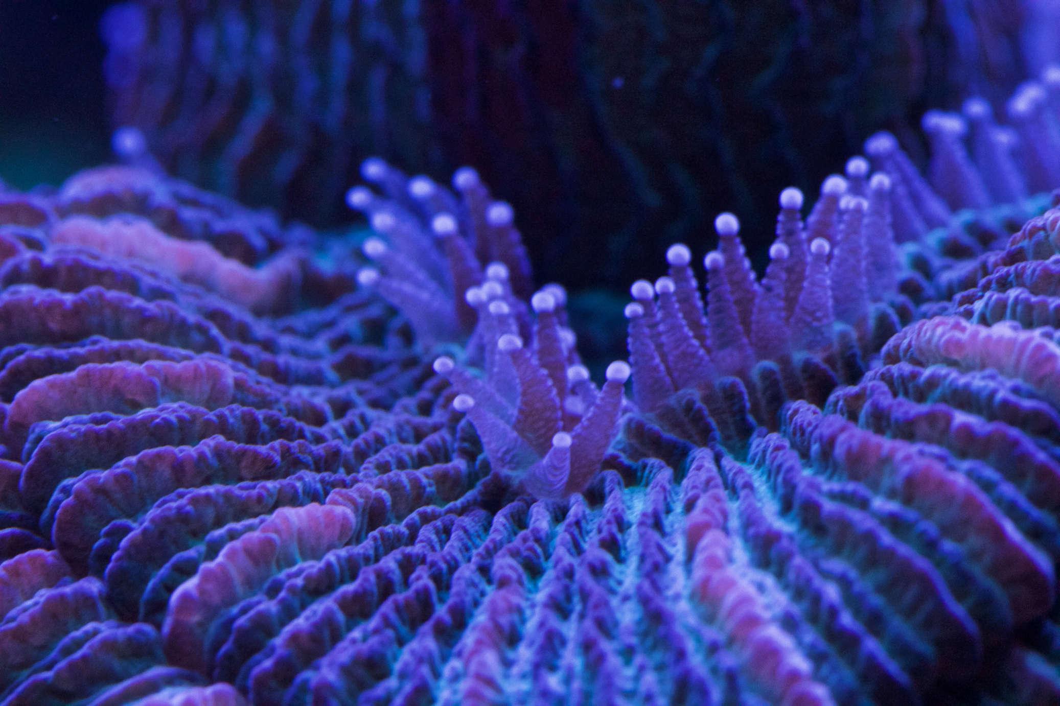 Navarchus Reef Tank - Page 3 Img_8535