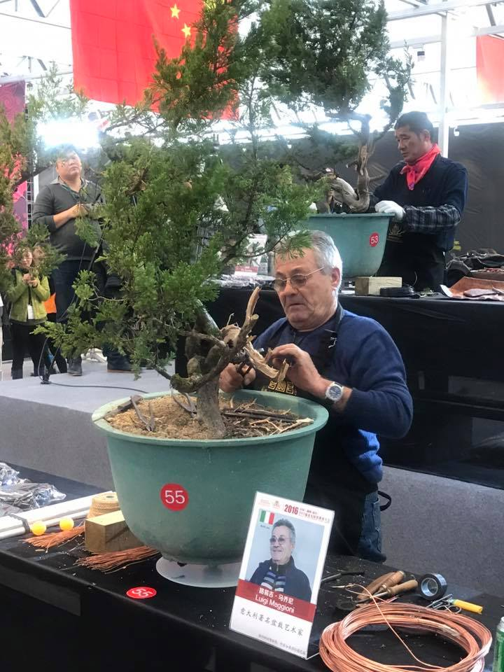 Bonsai Without Borders convention 15400910