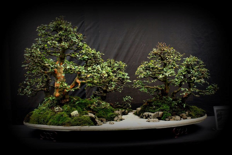 Bonsai Without Borders convention 15585010
